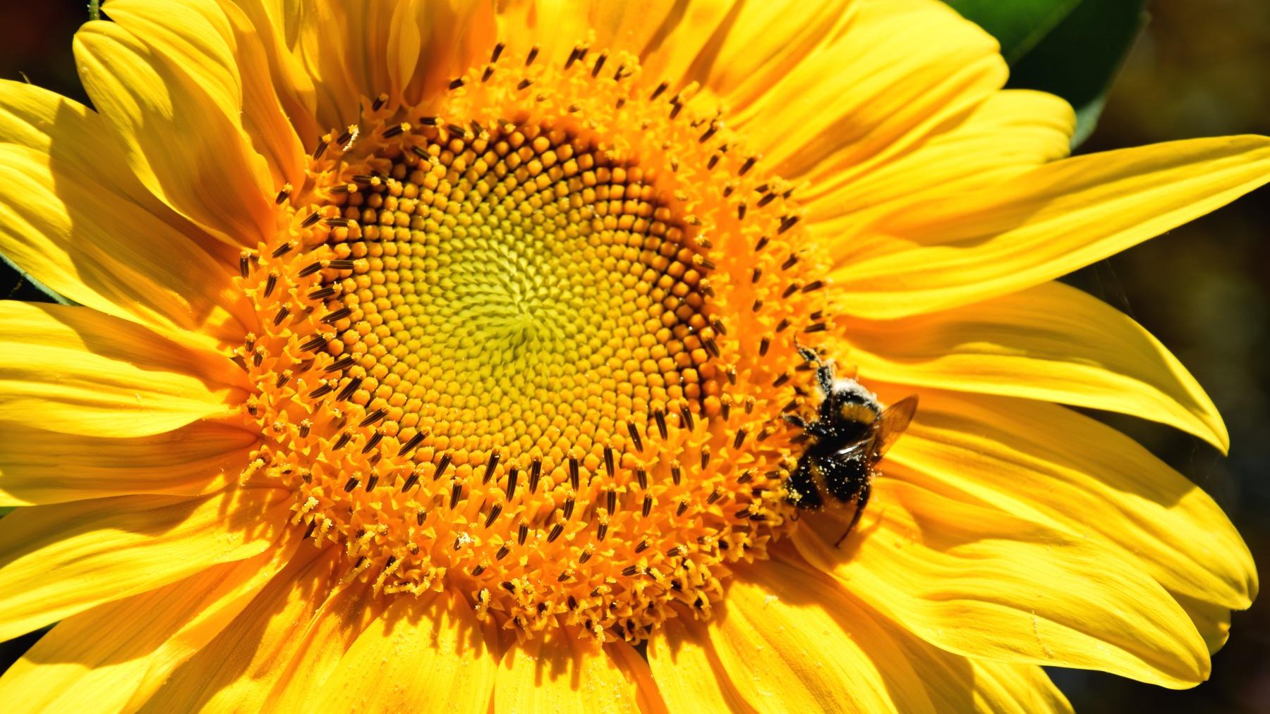 méhecske virágon